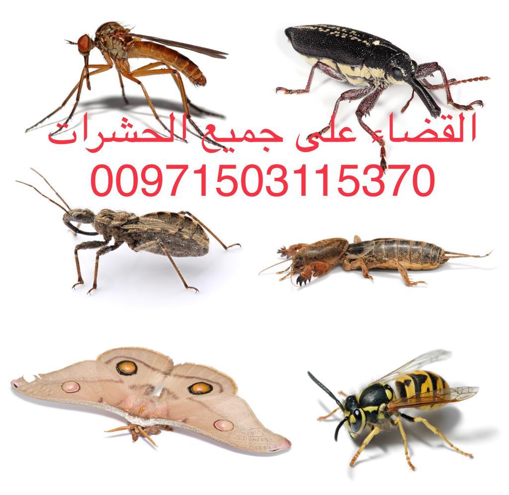 مكافحة جميع انواع الحشرات