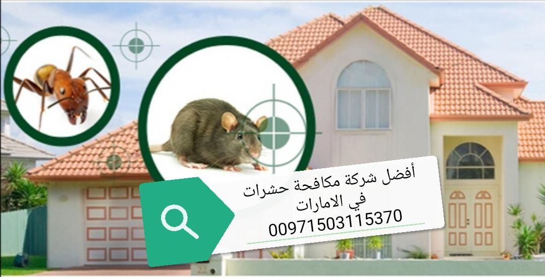 مكافحة الحشرات والتنظيفات في ابوظبي 00971503115370